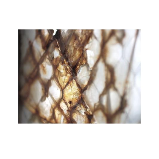 ImageBuilding6582_alcatraz